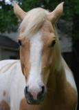 Equine Jack