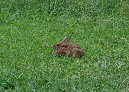 Wild rabbit sits and waits