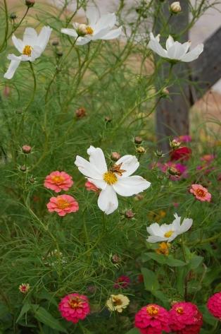 Wildflower visited
