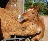 Bebe hugs Buff