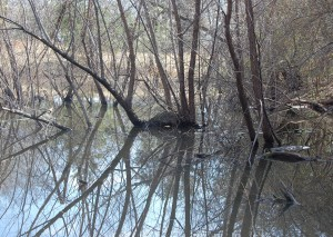 Water with branches