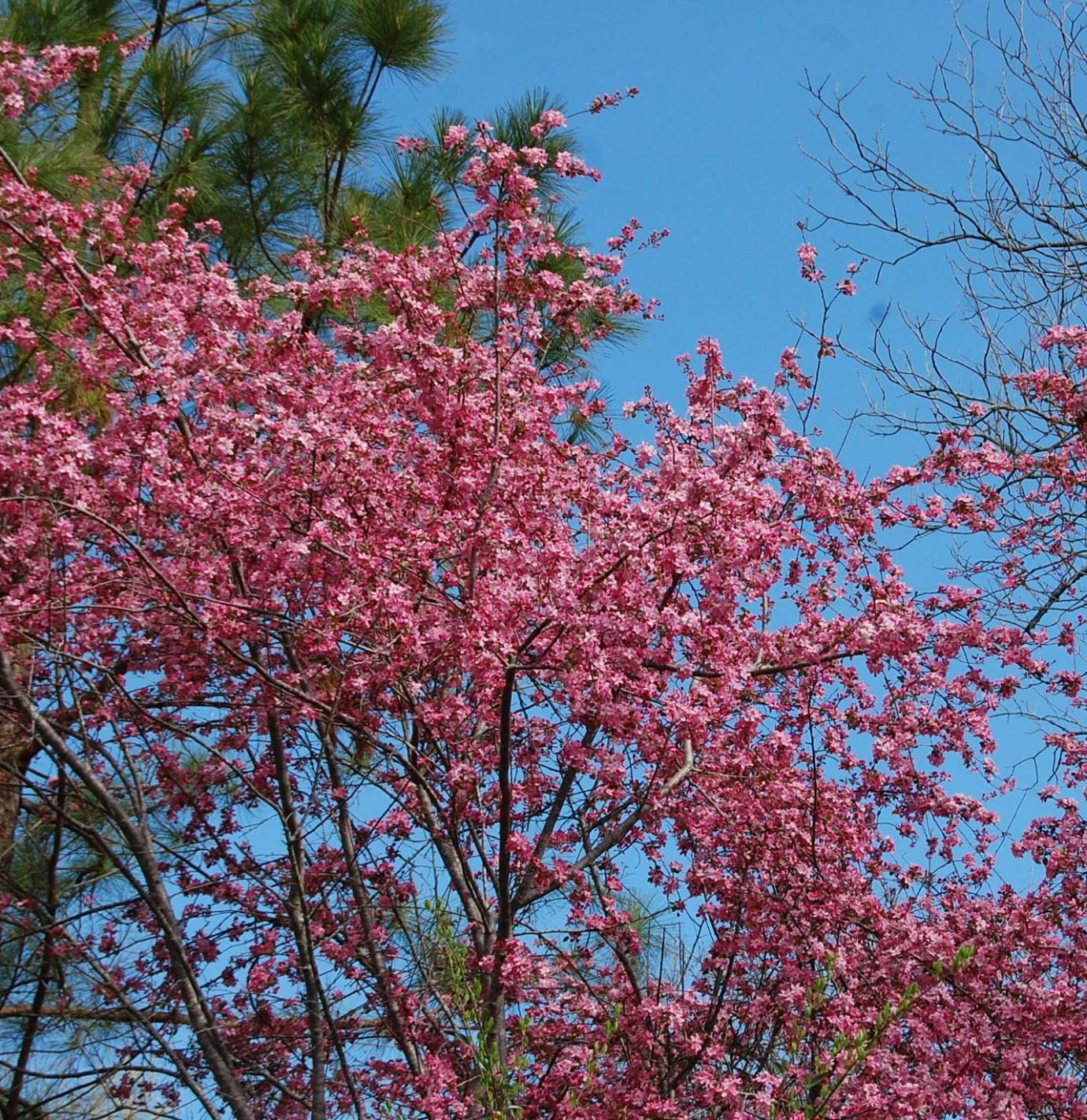 Full bloom tree top