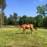 Bebe in pasture