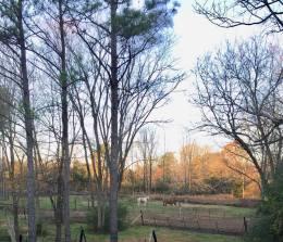 Jack & Bebe in pasture